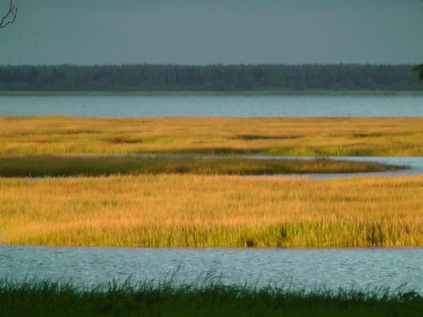 marsh adn sea